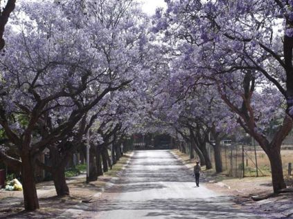 Beautiful Pretoria