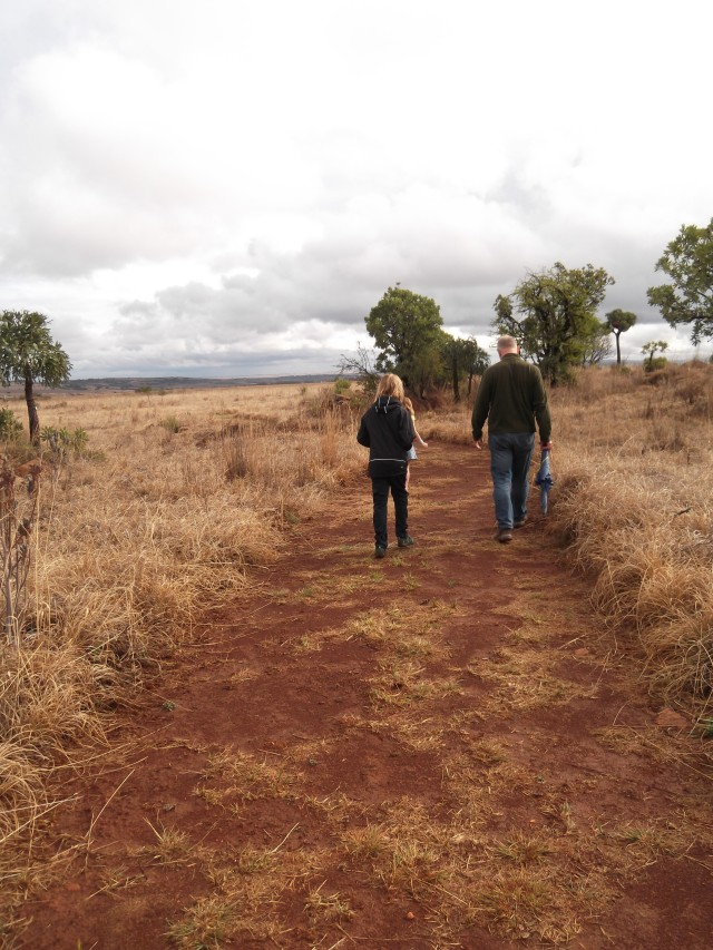 The grassy veld - walking over history in the Cradle of Humankind