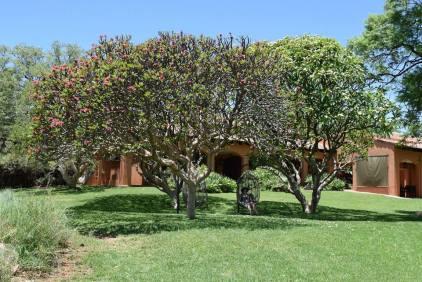 bush house lawn
