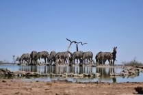 waterhole zebras