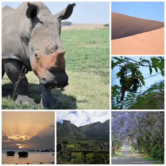 My africa collage
